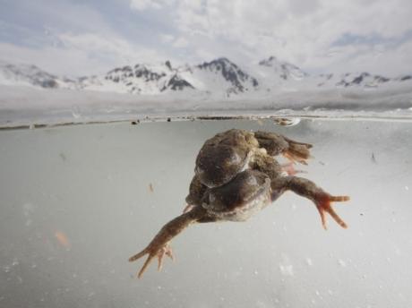 photo,photographie,photos,concours photographique,nature,montagne,alpes