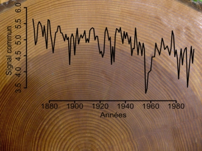 arbres,bois, réchauffement climatique,changements climatiques,climat
