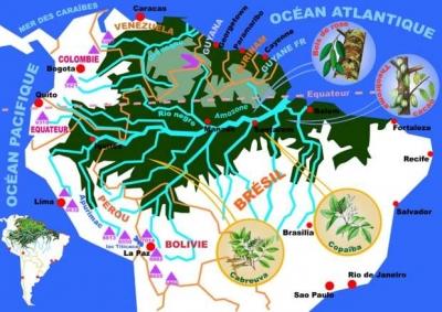 foret,déforestation,pluie,eau,sciences,écologie