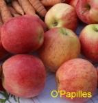 pommes-paniers.jpg