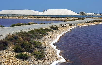 algues,énergies,biocarburants,co2,gaz à effets de serre