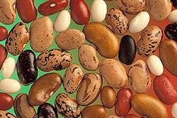 legumes-secs.jpg