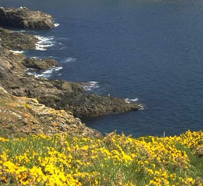 mer,méditerranée,pollution,biodiversité,pêche,cnrs