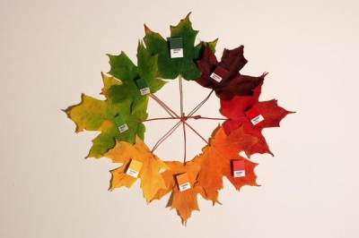 automne,lumière,couleurs,biologie,arbres,soleil