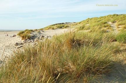 mer,océan,plage,dune,écologie,environnement,plantes