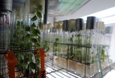 alimentation,ogm,alimentation biologique,agriculture bio,semences,variétés locales