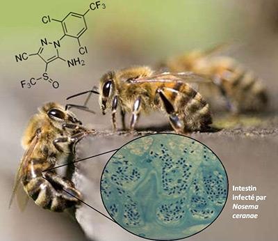 abeilles,apiculture,environnement,biodiversité,cnrs,inra