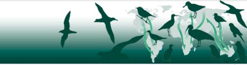oiseaux-migrateurs01.png