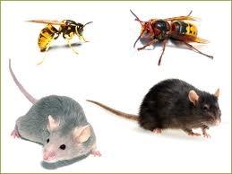 planète,écosystème,biodiversité,nuisibles,espèces,sciences,pollution