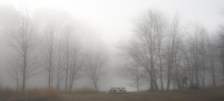 arbres,effet de serre,changements climatiques,atmosphère,environnement,réchauffement climatique