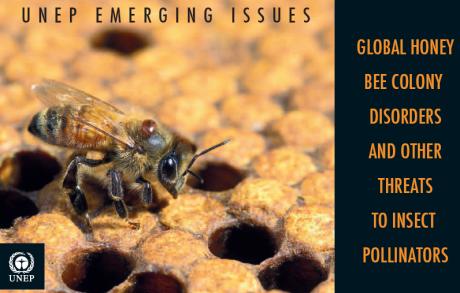 abeilles,apiculture,pesticides,changement climatique,pollinisateur,pollinisation,pollen
