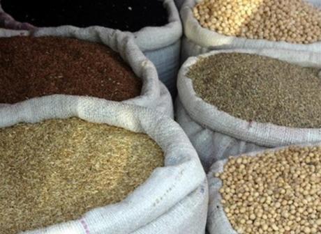 agriculture biologique,semences,paysan,biodiversité,alimentation