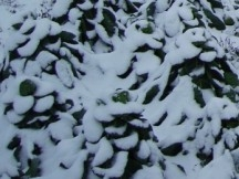 choux-neige.jpg