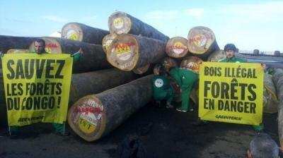 greenpeace,bois,afrique,environnement,foret,déforestation
