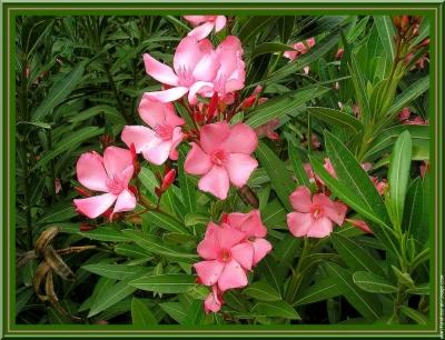 santé,chauffage,bois,énergies,fleurs