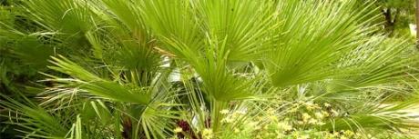jardinage,jardiner bio,sécheresse,arrosage,eau,espèces,paysages