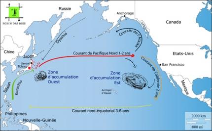 mer,océan,déchets,japon
