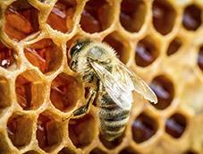 abeilles,apiculture,miel,plastique,pollution,pollen,consommation,fleurs