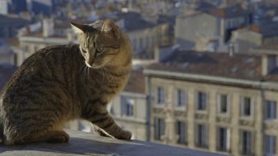 films,nature,faune,bordeaux,gironde,aquitaine,ville,oiseaux