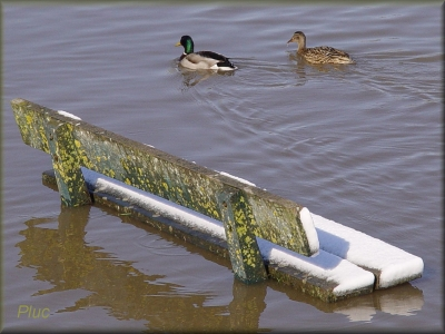 inondations,environnement,sciences,garonne,développement durable