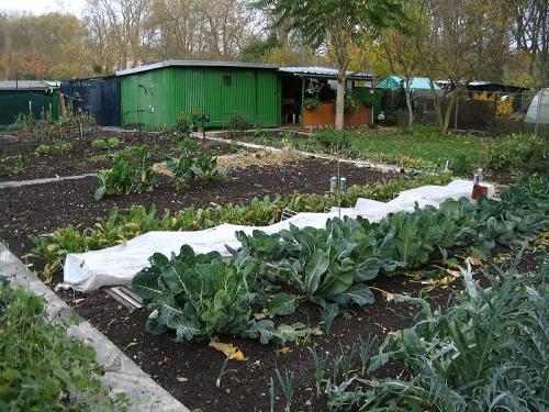 jardin-ouvrier01.jpg