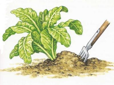 endive,endives,légumes,humour