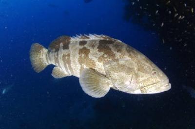 pêche,poissons,gastronomie,espèces menacées,surconsommation,océan,sciences