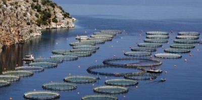 pêche,poissons,web,internet,aquaculture,mer,méditerranée