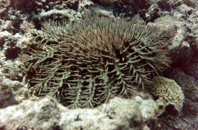 coraux,changements climatiques,réchauffement climatique,australie,mer,océan,environnement