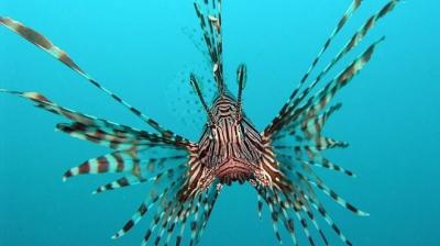 espèces invasives,espèces menacées,guadeloupe,antilles,pêche,poissons,biodiversité,écosystème