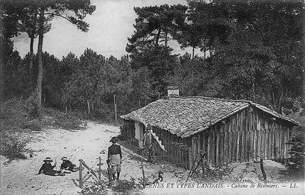 foret,bois,aquitaine,landes,pin,patrimoine