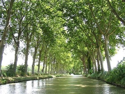 arbres,platane,bois,écologie,environnement,patrimoine,unesco