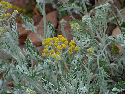 plante,plantes invasives,biodiversité,ile,écologie