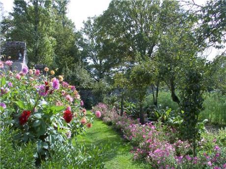 jardin,jardinage,jardiner bio,thym,bourrache,capucine,fleurs,potager