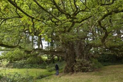 environnement,changements climatiques,foret,bois,sciences,arbres,écosystème,biodiversité