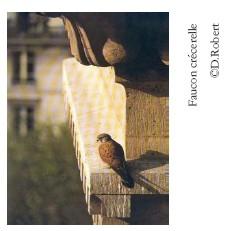 marais-stors-faune3.jpg