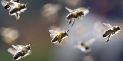 abeilles,apiculture,déchets,méthane,énergies renouvelables,développement durable,pollution