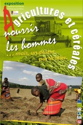 maïs,mais doux,céréales,agriculture,alimentation,consommation,planète