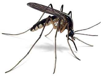 moustique,santé,plage,mer,méditerranée,insectes,insecticides