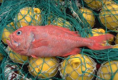 pêche,poissons,océans,europe,espèces,développement durable