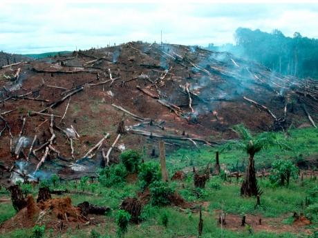 afrique,foret,déforestation,sciences,agriculture,changements climatiques,érosion