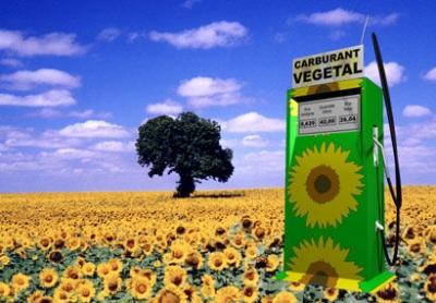 énergies,énergies renouvelables,biocarburants,écologie,alimentation,hydrocarbures,gaz à effets de serre