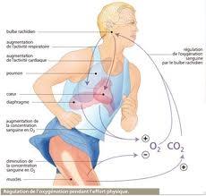 molécules,chimie,gênes,café,sport,médecine,santé