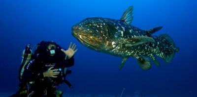 poissons,sciences,biodiversité,évolution,biologie