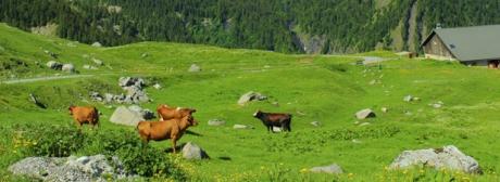 écosystème,biodiversité,agriculture durable,écologie,environnement,développement durable,économie