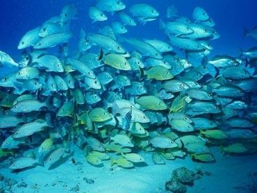 pêche,mer,océans,développement durable,environnement,écologie