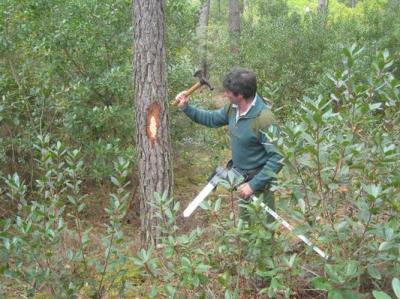 foret,bois,déforestation,environnement,chauffage,arbres
