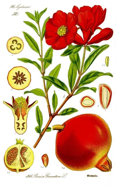 grenade,arboriculteur,fruits,jus de fruits,rapaces,oliviers,biodiversité,dessert