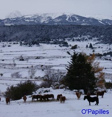 hiver-pyrenees-premiere-neige01.jpg
