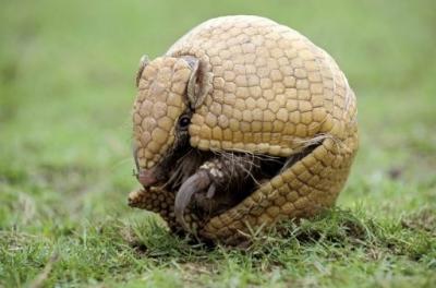 biodiversité,brésil,ong,espèces menacées
